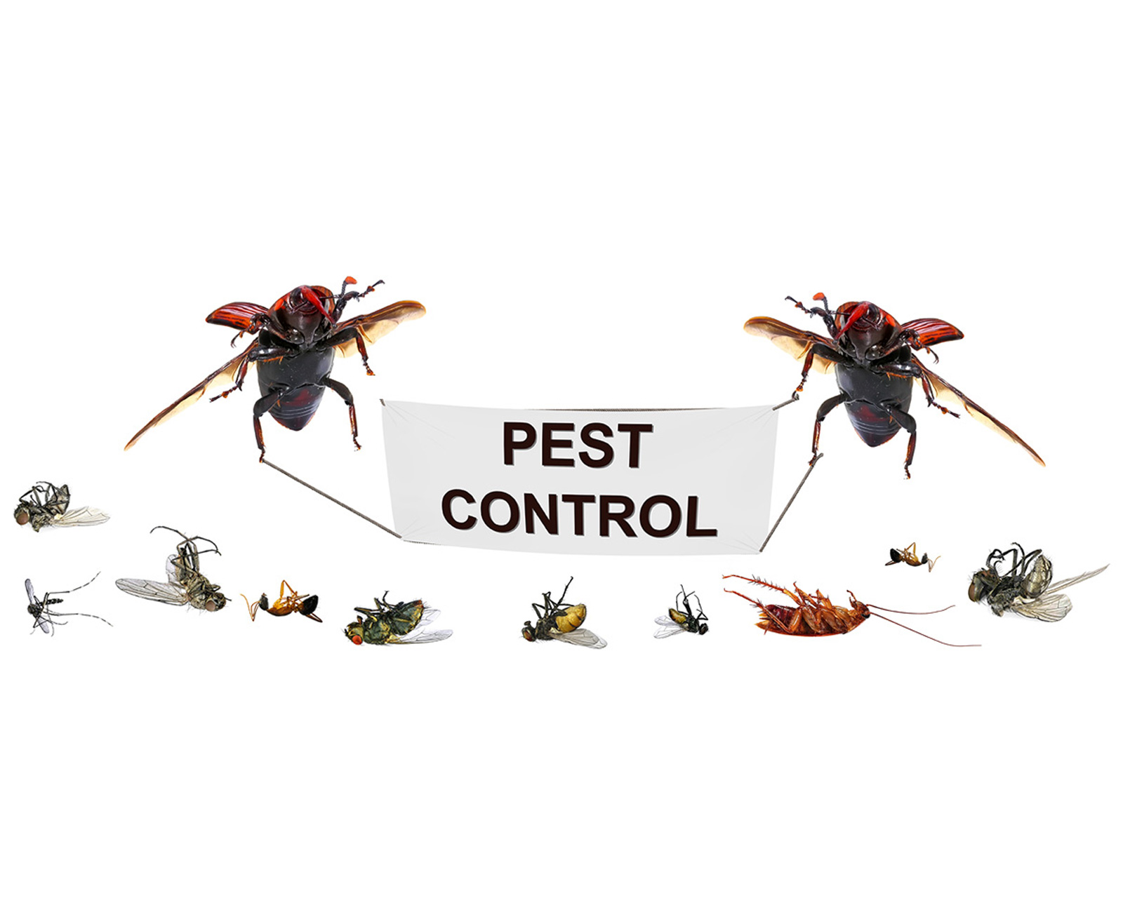 Perimeter Pest Control and Prevention Marietta GA